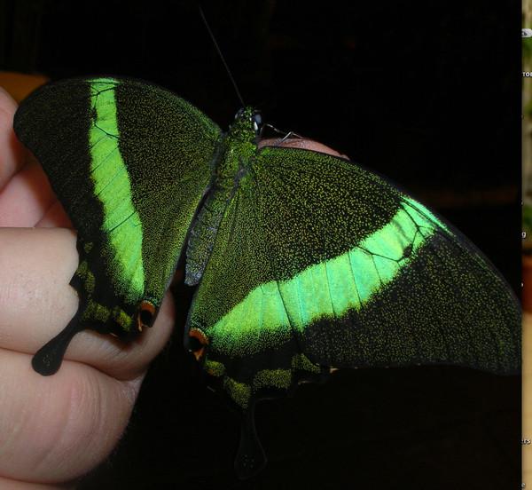 Ночные бабочки на ночь Петроградский аэлита эротический массаж в питере