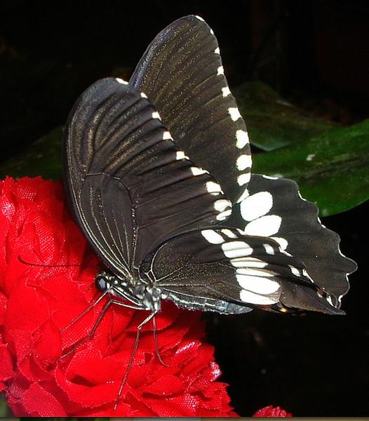 Ночные бабочки на ночь Петроградская досуг Крюкова Канала