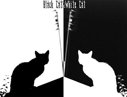 ЧЕРНАЯ КОШКА, БЕЛЫЙ КОТ / BLACK KAT, WHITE KAT / Эмир Кустурица