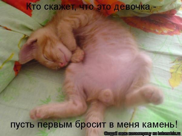 Сонник цветкова гласит, что увидеть кошку во сне — к слезам или измене.
