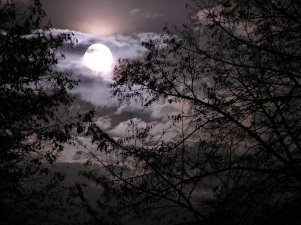 отчего луна так светит тускло