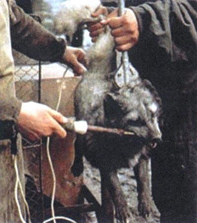 an analysis of animal cruelty