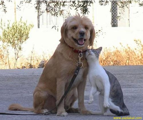 Боль горла ушей вязанная котами собаками