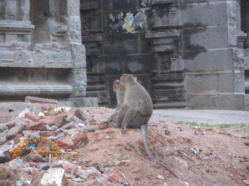 http://foto.mail.ru/mail/hari_om_tat_sat/india-tiruvannamalay/i-1524.jpg