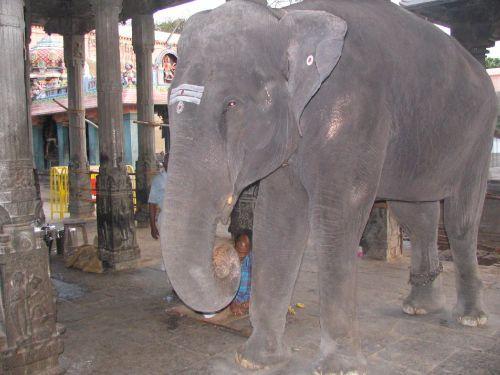 http://foto.mail.ru/mail/hari_om_tat_sat/india-tiruvannamalay/i-1526.jpg