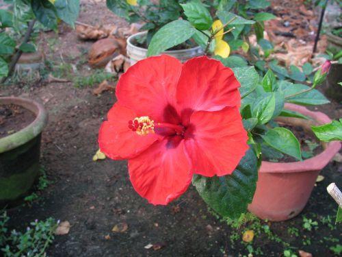 http://foto.mail.ru/mail/hari_om_tat_sat/india-trivandrum/i-898.jpg