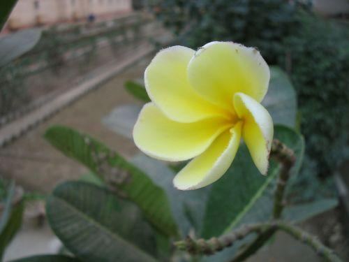 http://foto.mail.ru/mail/hari_om_tat_sat/india_2003/i-166.jpg
