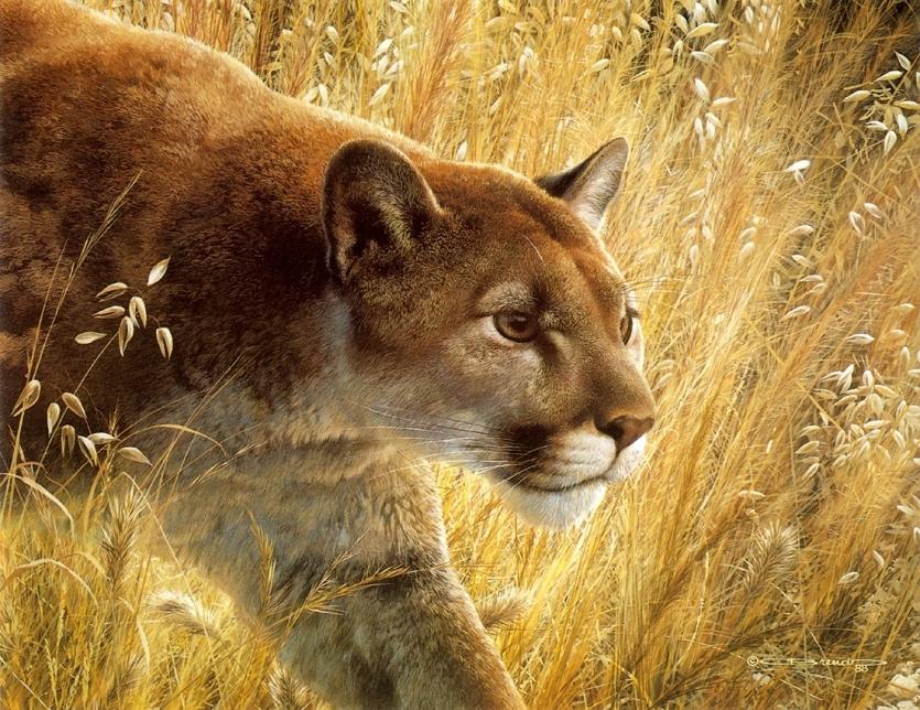 Совершенство природы-художник-анималист Carl Brenders