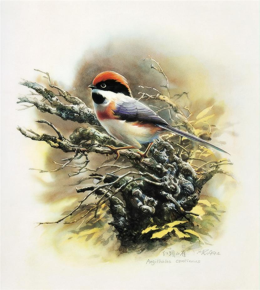 Птицы дивные от Zeng Xiao Lian-КрасотаМания.Красота во всех проявлениях.Красивые фото,картины,видео,музыка,анимация,мода и другая КРАСОТА