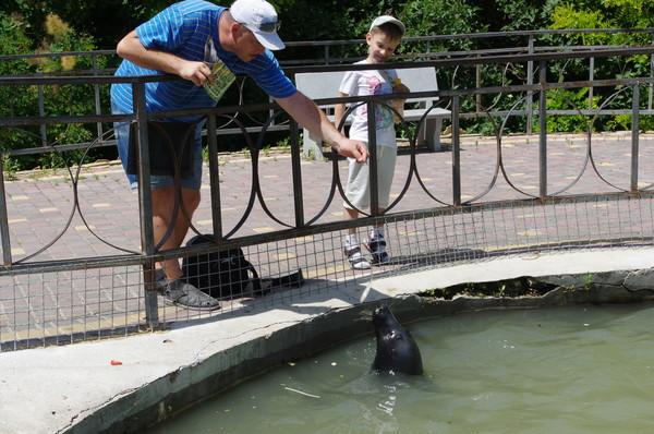 Серый тюлень в сафари-парке «Тайган»