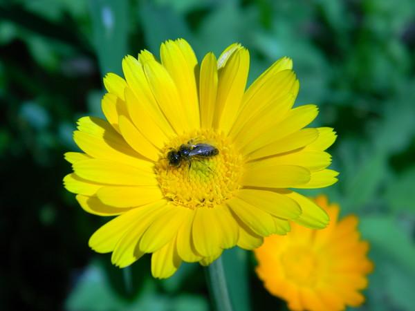 Жёлтый цвет насекомым больше по вкусу