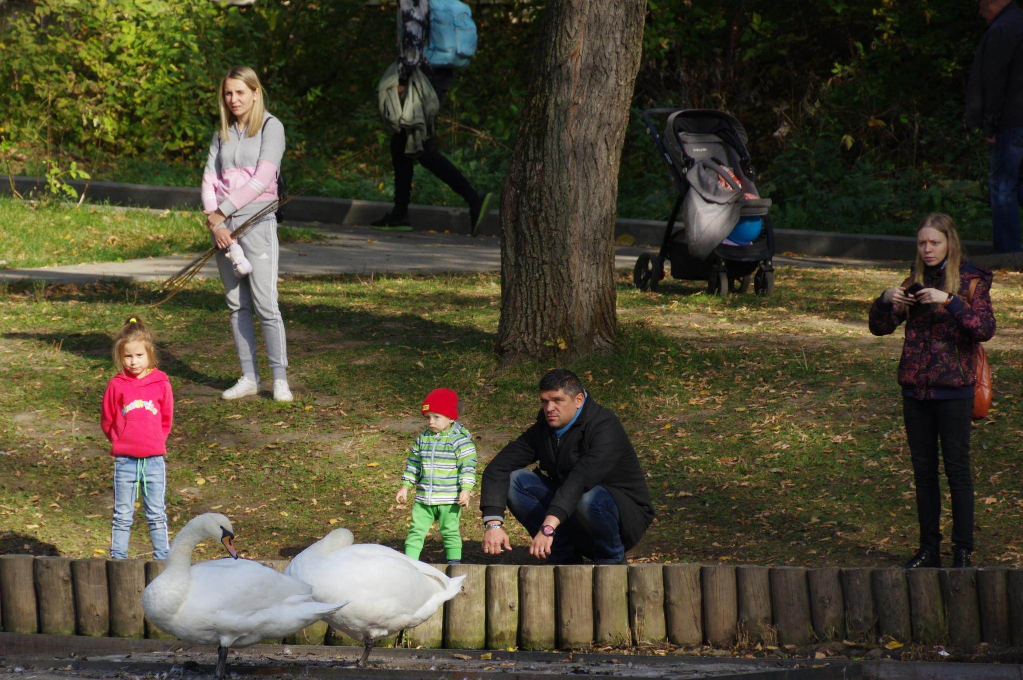 Белые лебеди на Леоновском пруду