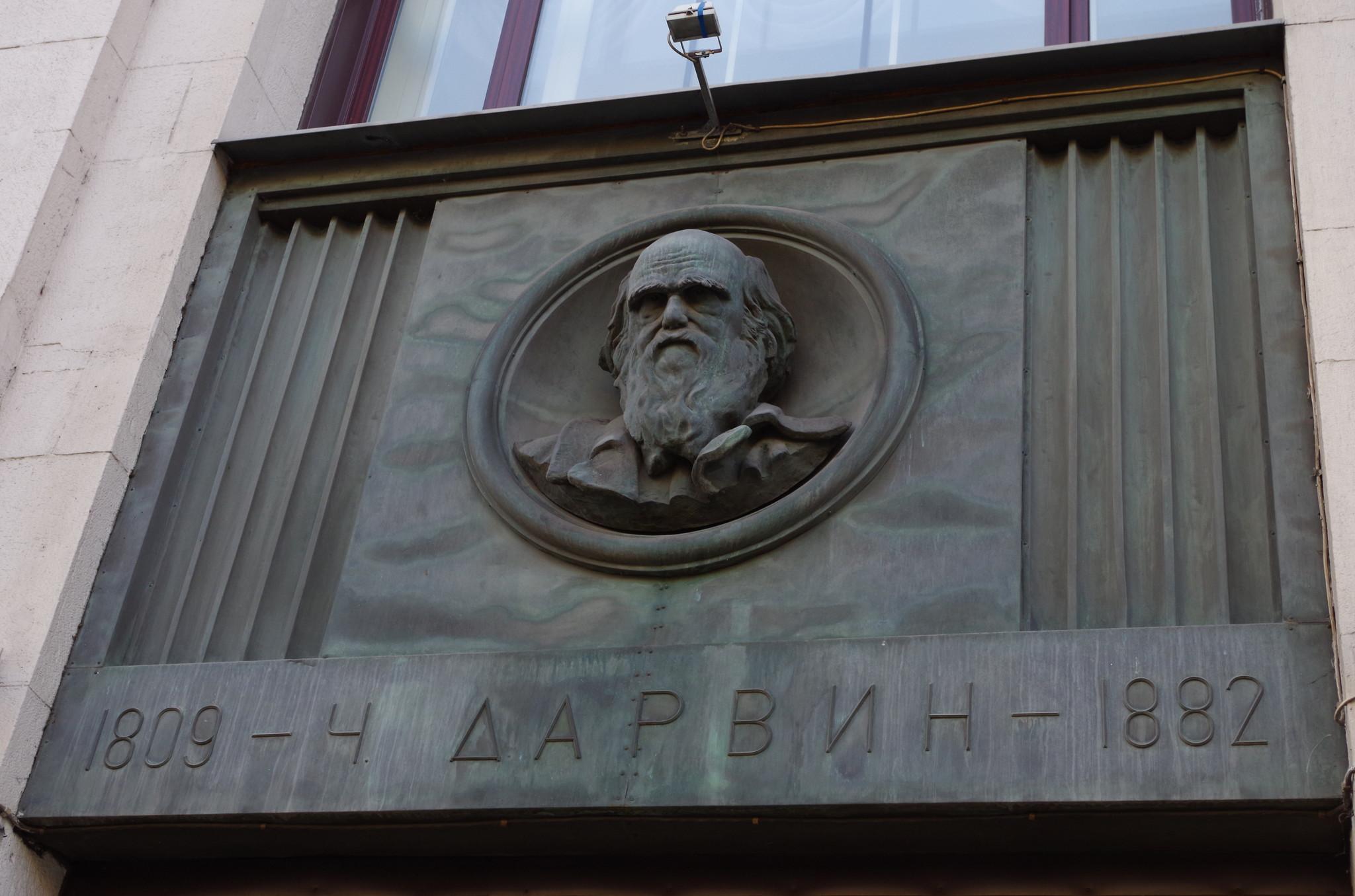 Бронзовый барельеф с изображением Чарльза Дарвина расположенный между пилонами фасада Российской государственной библиотеки