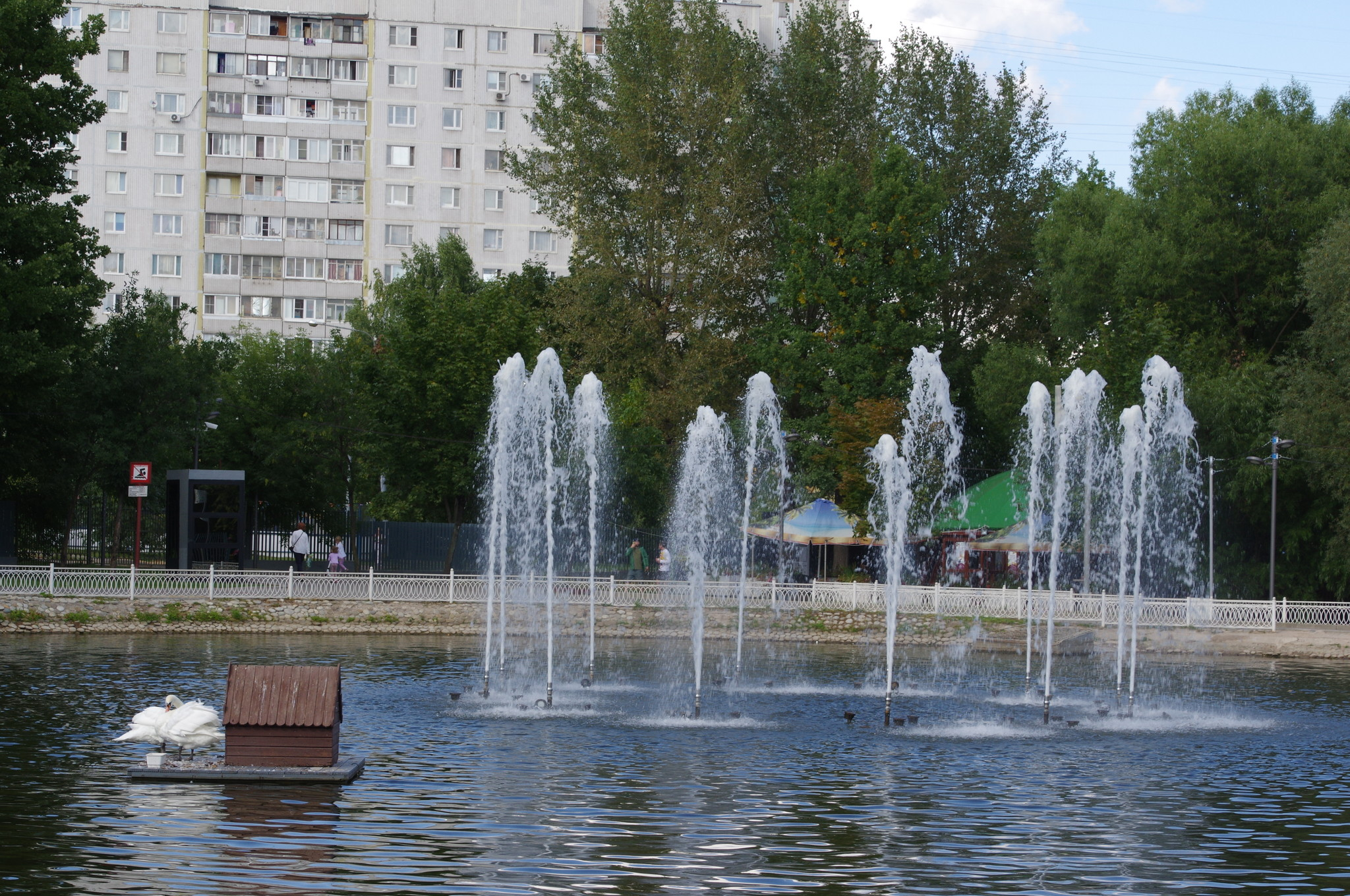 На пруду Лианозовского парка
