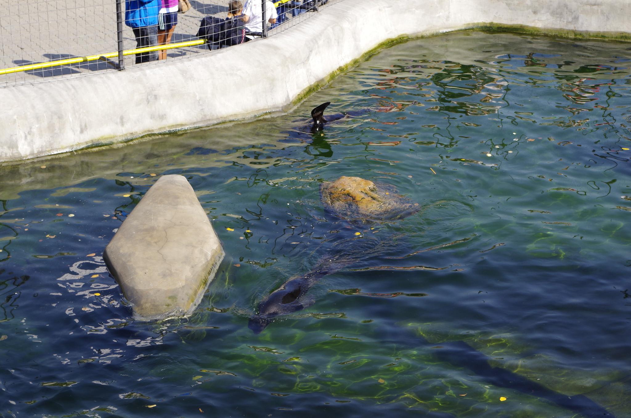 Бассейн ластоногих в Московском зоопарке