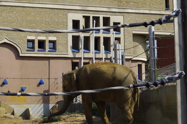 Слоновник Московского зоопарка