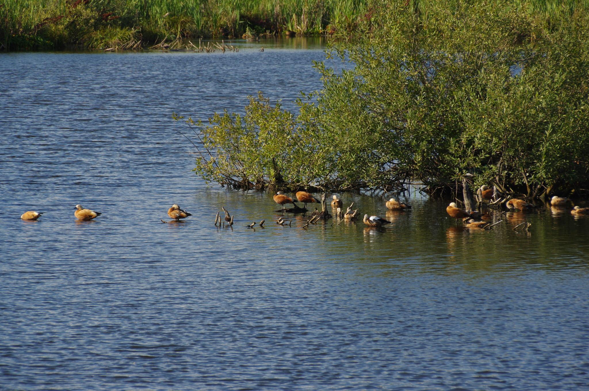 Огари на Долгих прудах в районе Северный СВАО г. Москвы