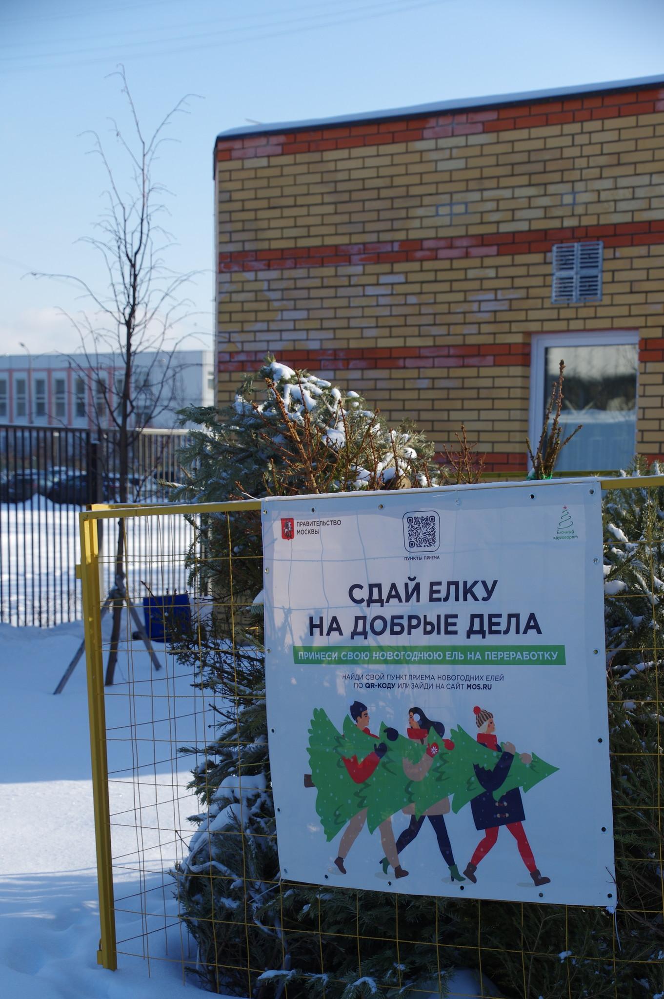 Специальный пункт приёма новогодних ёлок для утилизации в рамках акции «Ёлочный круговорот» на 9-ой Северной линии