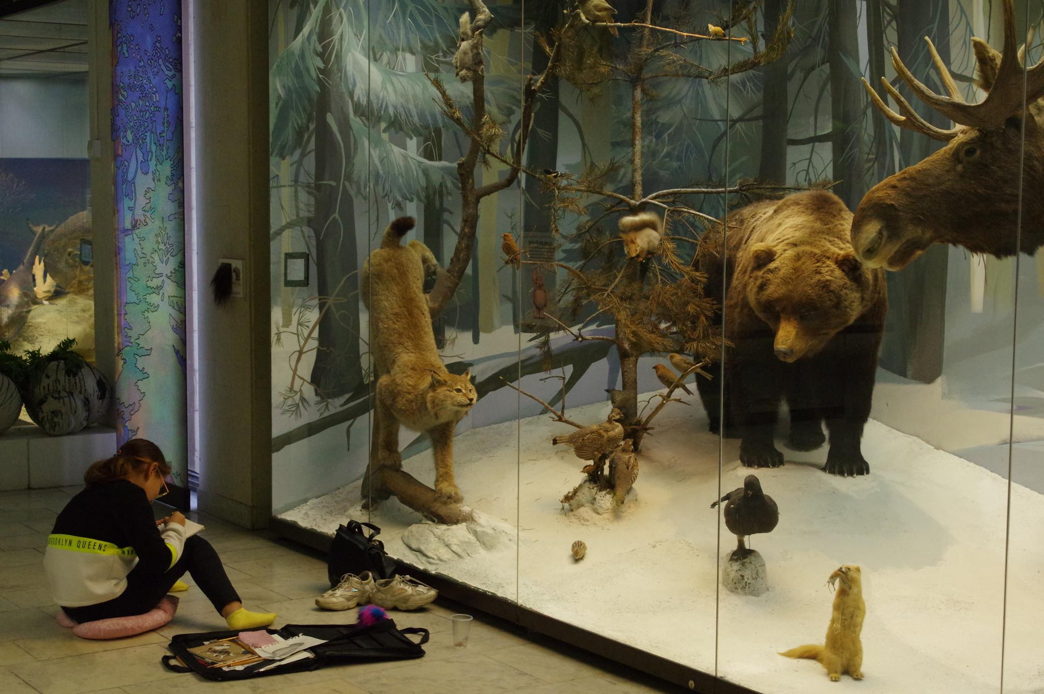 В Государственном Дарвиновском музее (улица Вавилова, дом 57)