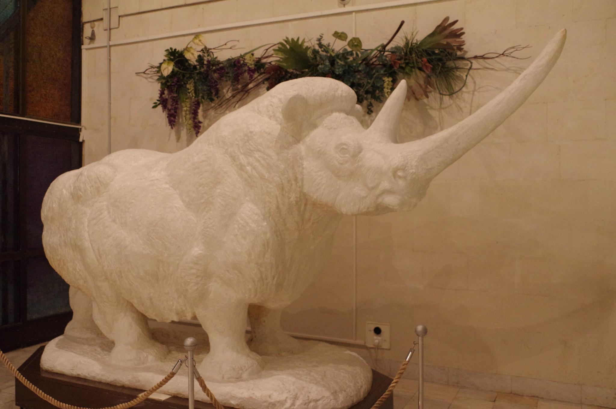 Шерстистый носорог. Флеров К.К. Гипс. (Государственный Дарвиновский музей)