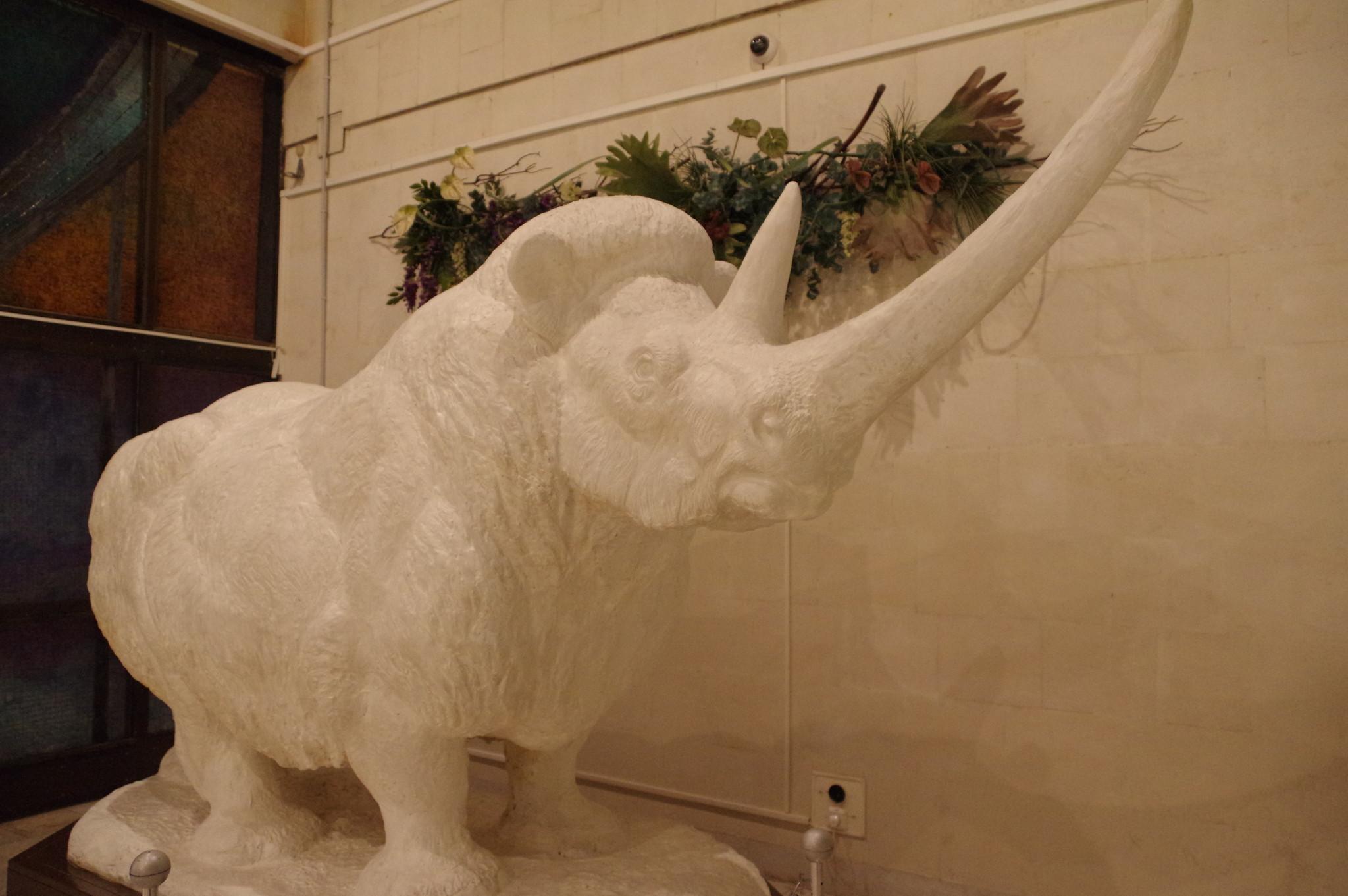 Шерстистый носорог. Флеров К.К. Гипс. Государственный Дарвиновский музей