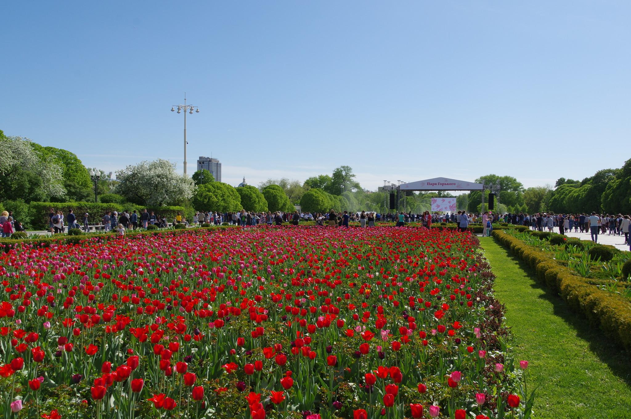 Цветник в Парке Горького