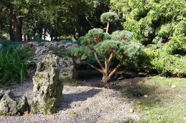 В Парке Горького посадили символическое «дерево дружбы»