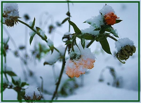 расположен между картинки красивые снег идет с добрым утром его