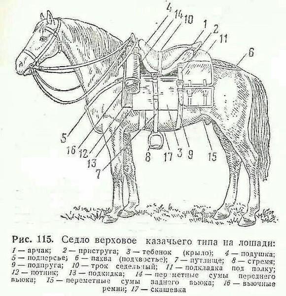 амуниция для лошади название с картинками над полями тюльпанами