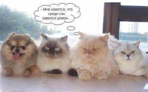 http://foto.mail.ru/mail/koctonpab/466/i-606.jpg