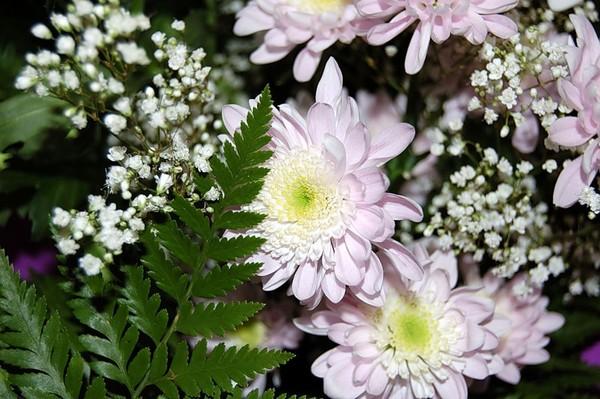 Что значит сорвать цветок