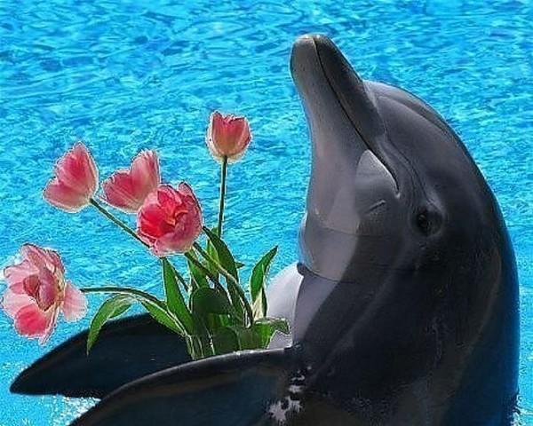 Делового стиля, с днем рождения картинка с дельфином