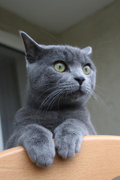 Диалоги с котом