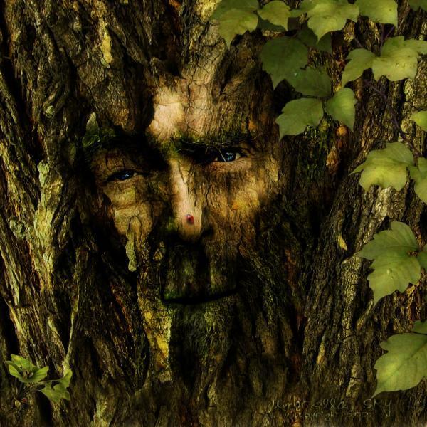 Дух дерева