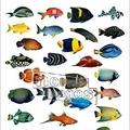 Saltwater Fish Stores Minnesota aquariumprosmn.com.