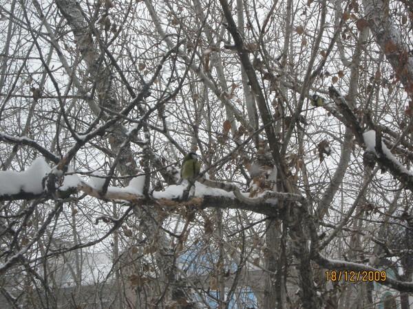http://content.foto.my.mail.ru/mail/olgadoct/23289/i-23328.jpg