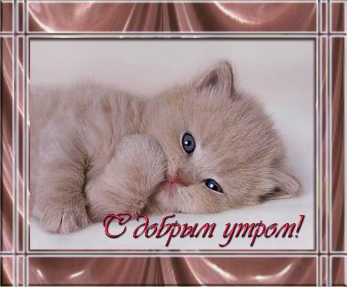 Картинки с котятами прикольные с добрым утром