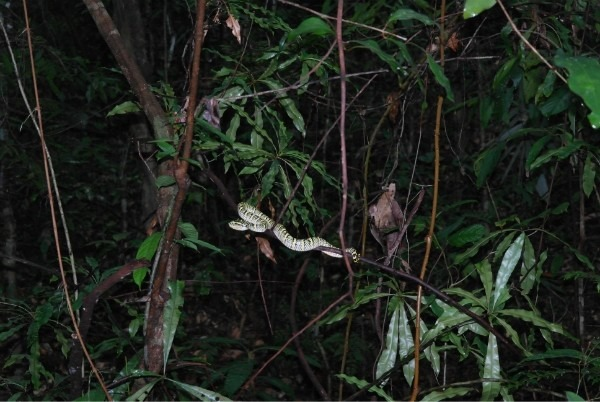 Ядовитые змеи Тайланда - Общая информация - Таиланд - Куда ...