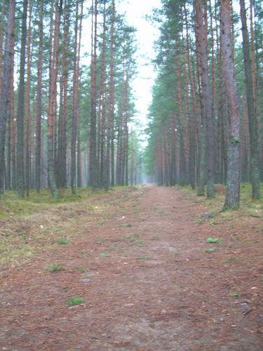 http://foto.mail.ru/mail/ragana-ja/228/i-327.jpg?