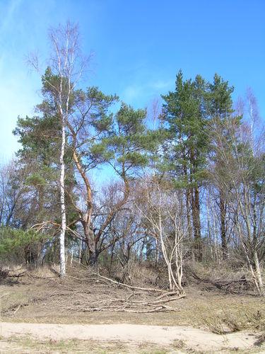 http://foto.mail.ru/mail/ragana-ja/228/i-510.jpg