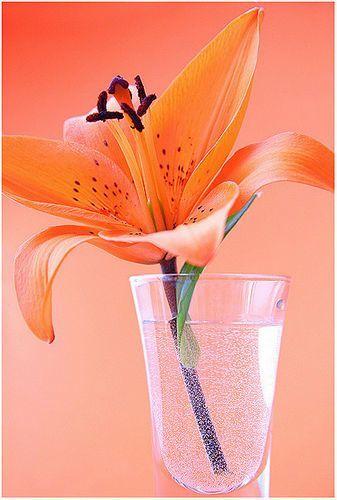 http://foto.mail.ru/mail/raisa24/179/i-2104.jpg