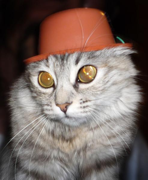 Хочу сделать коту шлем как у танкиста, как лучше сшить?  Может у кого выкройка есть?  Влезут ли уши?