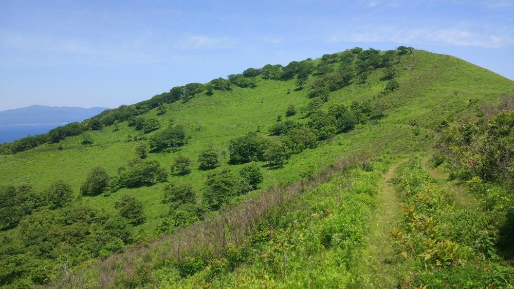 листья остров путятин приморский край фото гора старцева решили
