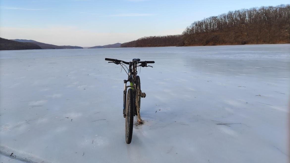 Новик зимой