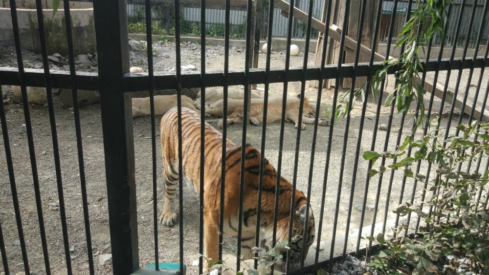 зоопарк Садгород