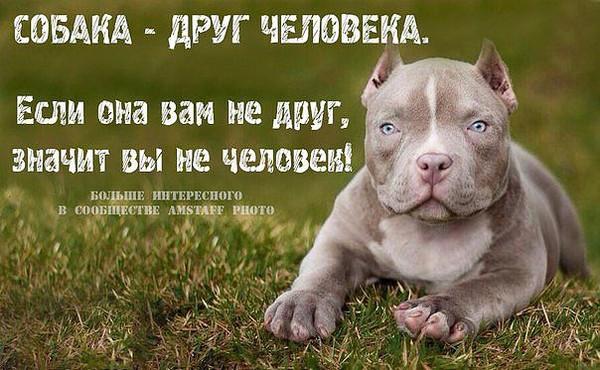 картинки цитаты про собак эта