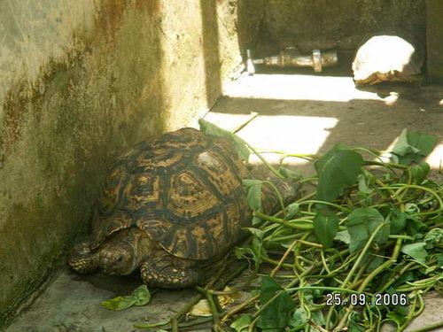 http://foto.mail.ru/mail/sandd/nigeria_09_06/i-16.jpg