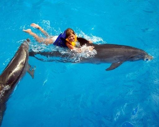 к чему сниться спасение дельфинов купить