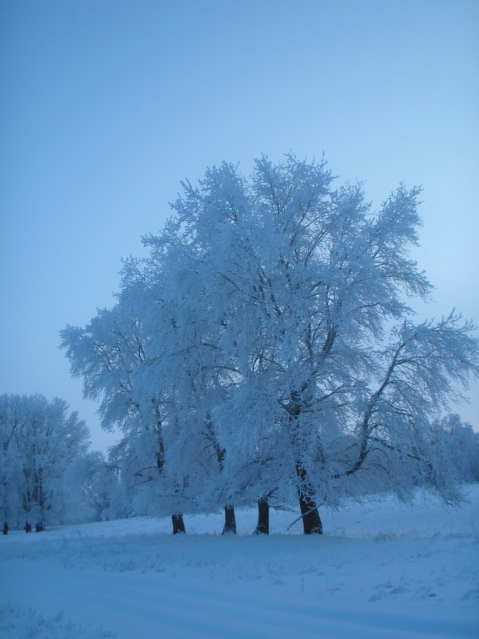 зимнее лето картинки знаю какой раздел