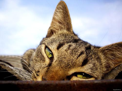 Коты, колибри и вечера в станице Калитвенская…